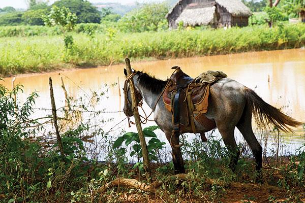 A horse in Viñales, Cuba